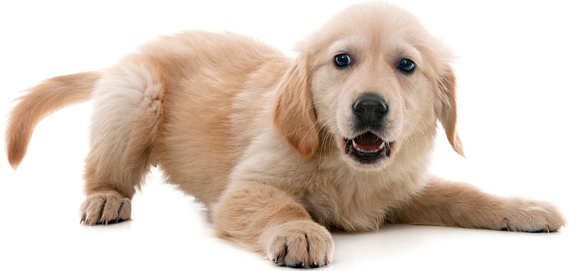 dog-crouching