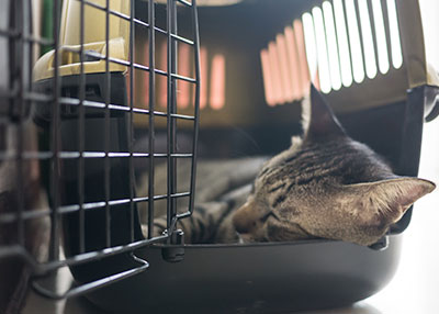 cat-in-carrier-animal-medical-center-of-Austin