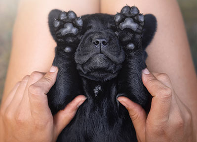 puppy-covering-eyes-amimal-medical-center-of-Austin