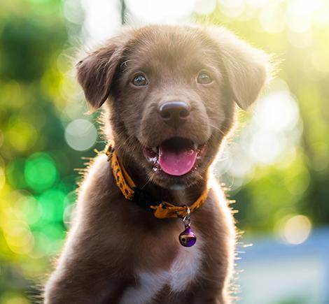 brown puppy in field