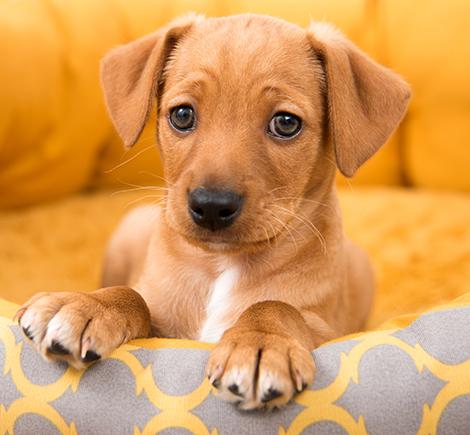 dog on dog bed