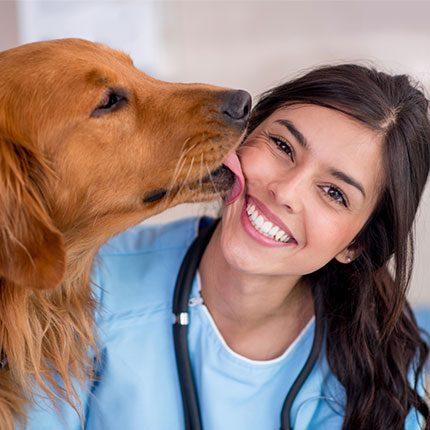 dog-licking-vets-face